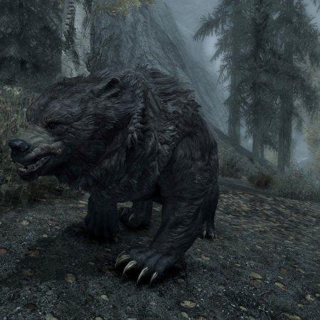 Cave bear of Skyrim